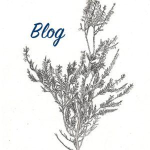 Blog_V3