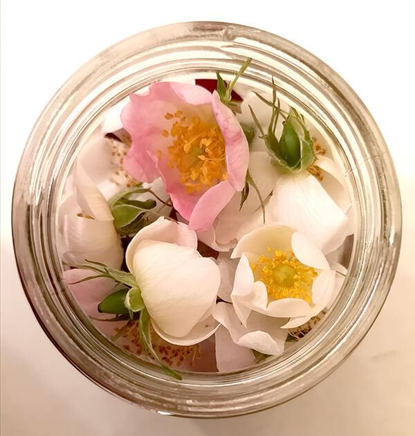 wild roses in jar