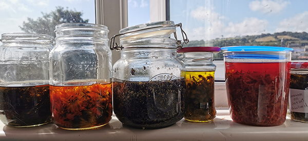 herbs infusing in oil