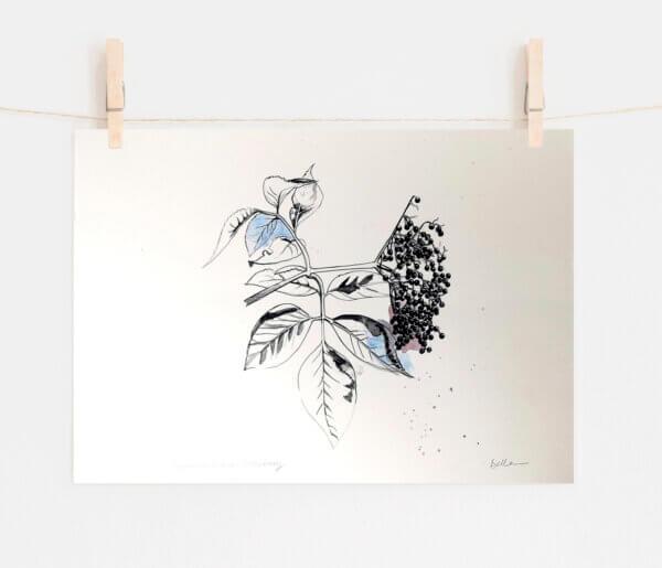 Elderberry Print